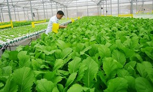 Từ 15/10, thêm nhiều quy định đặc thù khuyến khích phát triển sản xuất nông nghiệp hữu cơ
