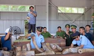 Mở rộng vụ án vận chuyển trái phép ngà voi từ nước ngoài vào Việt Nam