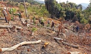 Phá rừng phòng hộ, 2 đối tượng bị phạt 200 triệu đồng