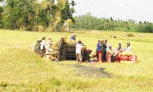 Yêu cầu ngân hàng hỗ trợ doanh nghiệp thu mua, tạm trữ thóc, gạo
