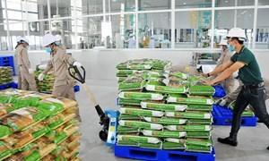 Khu vực kinh tế trong nước trở thành điểm sáng xuất khẩu