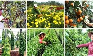Quản lý và sử dụng kinh phí sự nghiệp thực hiện Chương trình mục tiêu quốc gia xây dựng nông thôn mới