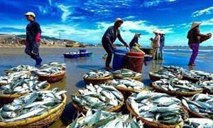 """Ngành Thủy sản Việt Nam: Chưa thể gỡ được """"thẻ vàng""""?"""