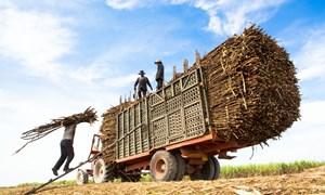 Áp dụng biện pháp phòng vệ phù hợp để bảo vệ sản xuất mía đường trong nước
