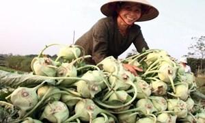 Lĩnh vực tài chính vi mô tại Việt Nam: Cần sự chuyên nghiệp