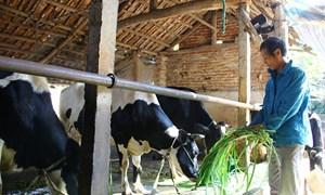 Ký hợp đồng bảo hiểm nông nghiệp đầu tiên cho bò sữa tại Vĩnh Phúc