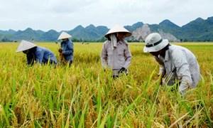Bảo Việt Nghệ An bồi thường hơn 2 tỷ đồng cho 780 hộ tham gia bảo hiểm nông nghiệp
