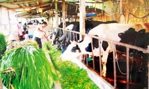 Hà Nội: Vượt khó để đưa bảo hiểm nông nghiệp đến gần dân