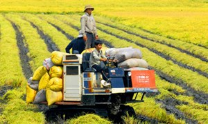 Khơi thông dòng vốn vào nông nghiệp, nông thôn