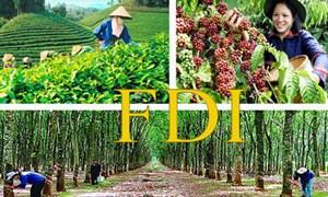 Tăng cường thu hút vốn FDI cho nông nghiệp