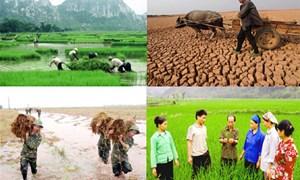 Bảo hiểm nông nghiệp: Chủ trương đúng, hiệu quả cao