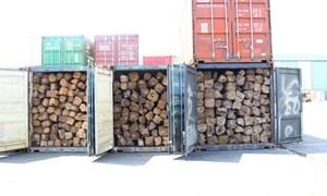 Tạm giữ 11 container gỗ lậu tại cảng Sài Gòn