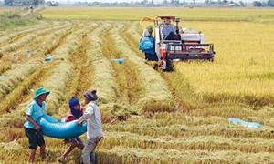 Năm 2015, Hưng Yên tăng gấp đôi mô hình cánh đồng mẫu sản xuất lúa xuân