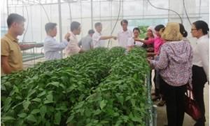 Tập huấn về kỹ thuật sản xuất rau theo công nghệ Hàn Quốc