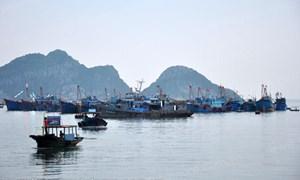 Quy hoạch và lập dự án đầu tư xây dựng Trung tâm nghề cá lớn