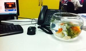 Những lưu ý khi bố trí bể cá trong phòng làm việc