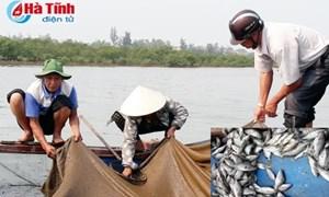 BIDV đề xuất Chính phủ hỗ trợ ngư dân vay vốn tại các địa phương có cá chết hàng loạt
