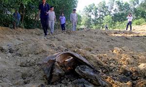 Chính phủ yêu cầu kiểm tra việc chôn rác thải của Formosa