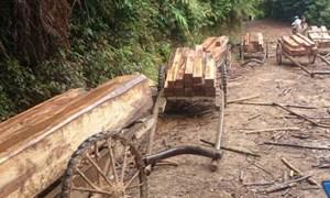 Làm rõ thông tin rừng tự nhiên bị chặt phá tại Quảng Trị