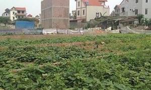 Xử lý vi phạm về đất đai tại huyện Đông Anh
