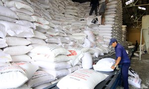 Thủ tướng giao Bộ Tài chính xuất cấp gạo cho Gia Lai, Đắk Lắk