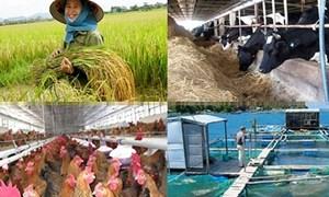 Kết quả đạt được sau một năm triển khai thí điểm bảo hiểm nông nghiệp