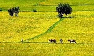 Ngăn chặn lạm quyền, áp đặt trong quản lý đất đai