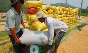 Xây dựng quy chế thu mua tạm trữ lúa gạo