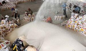 Xuất khẩu gạo của Việt Nam: Không lo đầu ra