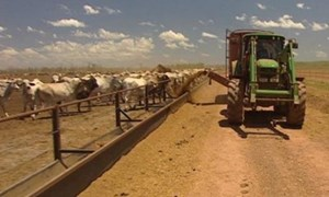 Australia: Ngành nông nghiệp 'hút' đầu tư nước ngoài