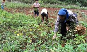 Thực hiện chuyển giao kỹ thuật chăn nuôi, trồng trọt