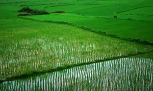 NSNN hỗ trợ 1 triệu đồng/ha/năm cho đất chuyên trồng lúa nước