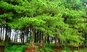 Bảo vệ và phát triển rừng phòng hộ