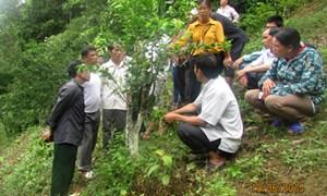 Bắc Kạn: Khuyến nông giúp đồng bào vượt qua khó khăn