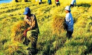 Đẩy mạnh tái cơ cấu nông nghiệp ở Đồng bằng Sông Cửu Long