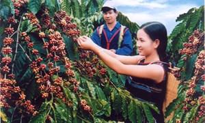 Lai Châu: Đẩy mạnh áp dụng mô hình, dự án khuyến nông vào sản xuất
