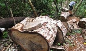 Ngân sách góp phần bảo vệ và phát triển rừng giai đoạn 2011-2020