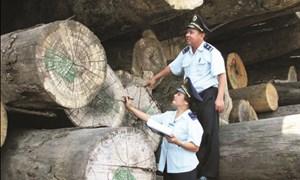 Vai trò phụ nữ trong hoạt động hải quan