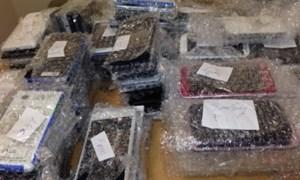 Bắt giữ vụ buôn lậu điện thoại qua đường hàng không tại Đà Nẵng