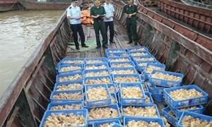 Hải quan Quảng Ninh tăng cường ngăn chặn gia cầm nhập lậu