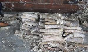 Khởi tố hình sự vụ vận chuyển trái phép gần 900 kg ngà voi