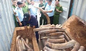 Hải quan Việt Nam tích cực ngăn chặn ngà voi nhập khẩu trái phép