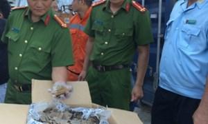 Hải quan Hải Phòng khởi tố vụ nhập lậu 775 kg vảy tê tê