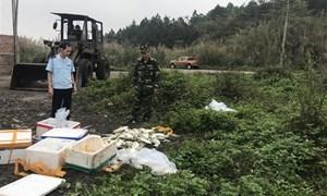 Móng Cái: Phát hiện điểm tập kết 700kg cá chim Trung Quốc nhập lậu