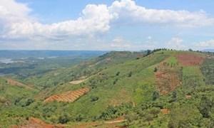 Nhiều vi phạm, khuyết điểm trong quản lý, sử dụng đất nông, lâm nghiệp tại Đắk Nông