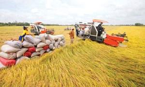 Bảo vệ lúa gạo trước ảnh hưởng của biến đổi khí hậu