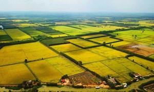 Thúc đẩy chuyển dịch đất nông nghiệp, đáp ứng yêu cầu phát triển bền vững
