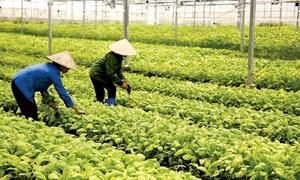 Nhiều giải pháp tài chính hỗ trợ nông nghiệp - nông thôn