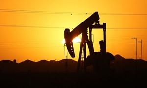 Giá dầu có thể xuống thấp đến mức nào? 5 đô la/thùng?