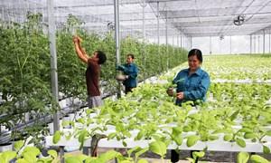 Hạ tầng có tốt mới dẫn vốn vào nông nghiệp